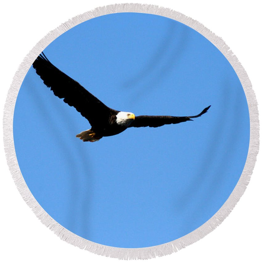 Eagle Round Beach Towel featuring the photograph Bald Eagle II by Thomas Marchessault
