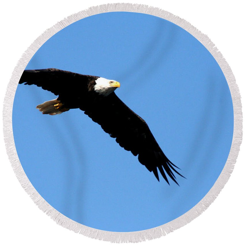 Eagle Round Beach Towel featuring the photograph Bald Eagle IIi by Thomas Marchessault
