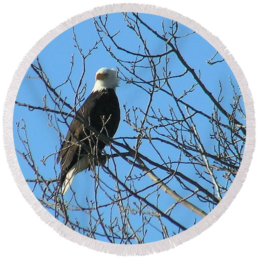 Bald Round Beach Towel featuring the photograph Bald Eagle by Louise Magno