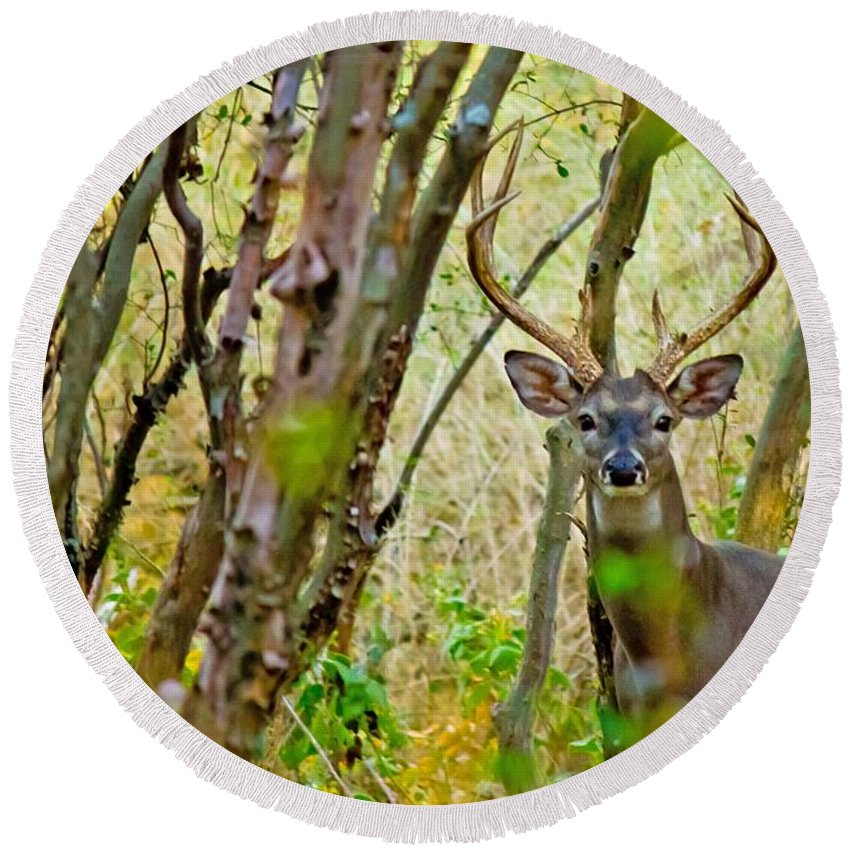 Michael Tidwell Photography Round Beach Towel featuring the photograph Bambi's Father by Michael Tidwell