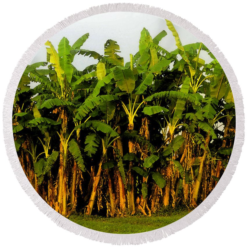 Banana Trees Round Beach Towel featuring the painting Banana Trees by David Lee Thompson