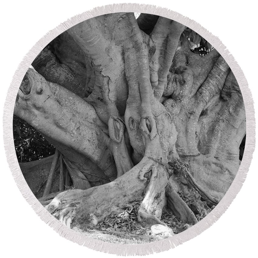 Tree Round Beach Towel featuring the photograph Banyan Tree by Rob Hans