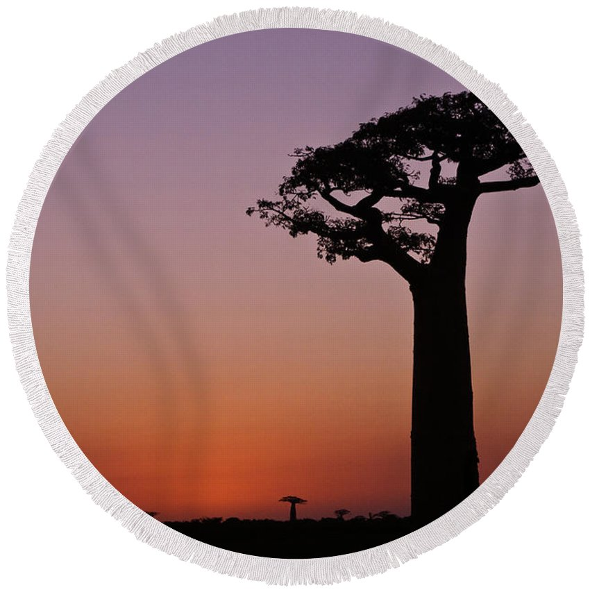 Madagascar Round Beach Towel featuring the photograph Baobab At Sunset by Michele Burgess