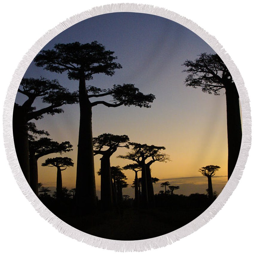 Madagascar Round Beach Towel featuring the photograph Baobab Forest At Sunset by Michele Burgess