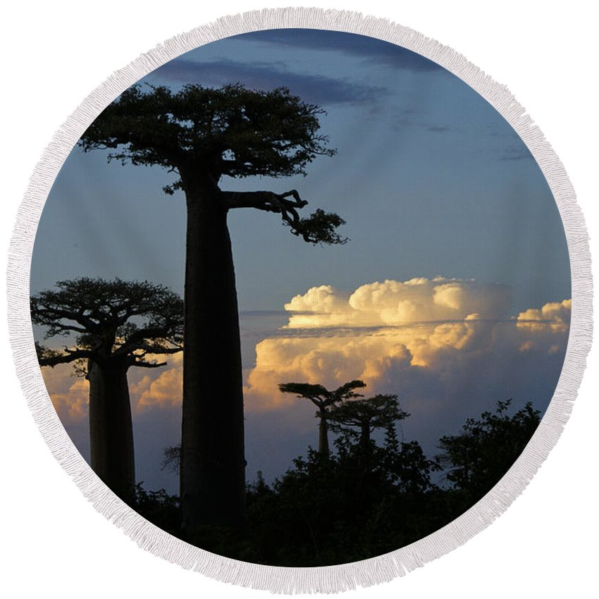 Madagascar Round Beach Towel featuring the photograph Baobabs And Storm Clouds by Michele Burgess