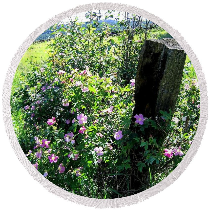 Wild Roses Round Beach Towel featuring the photograph Barbed Wire And Roses by Will Borden