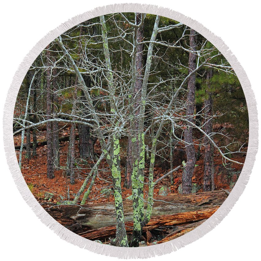 Bare Tree Round Beach Towel featuring the photograph Bare Tree And Boulders In Mark Twain Forest by Greg Matchick