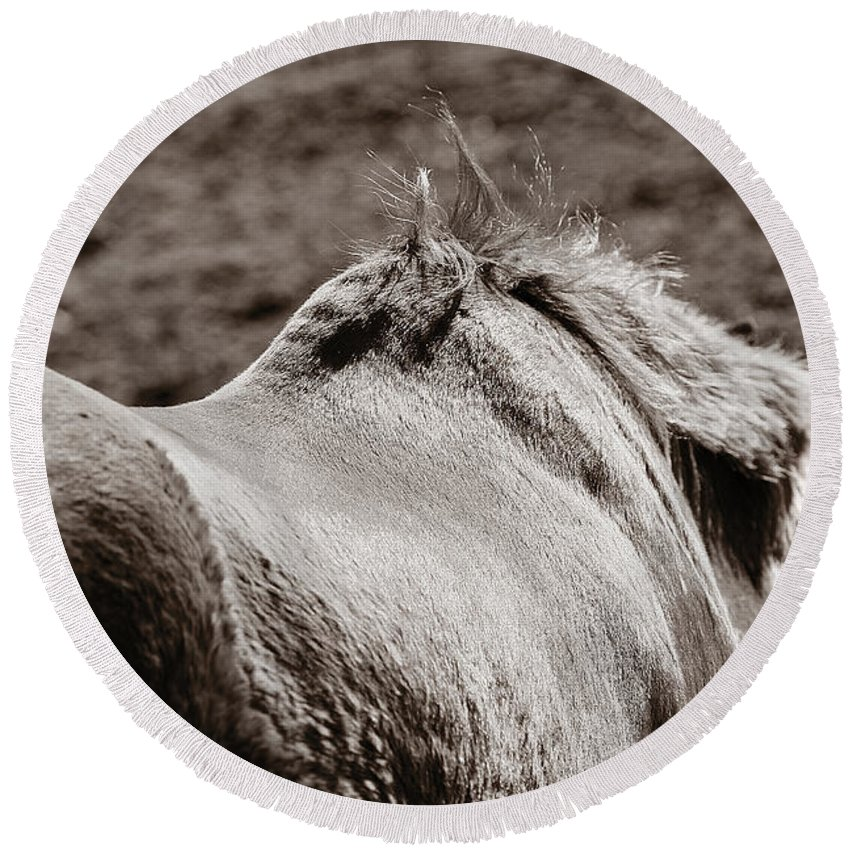 Horse Round Beach Towel featuring the photograph Bareback by Angela Rath