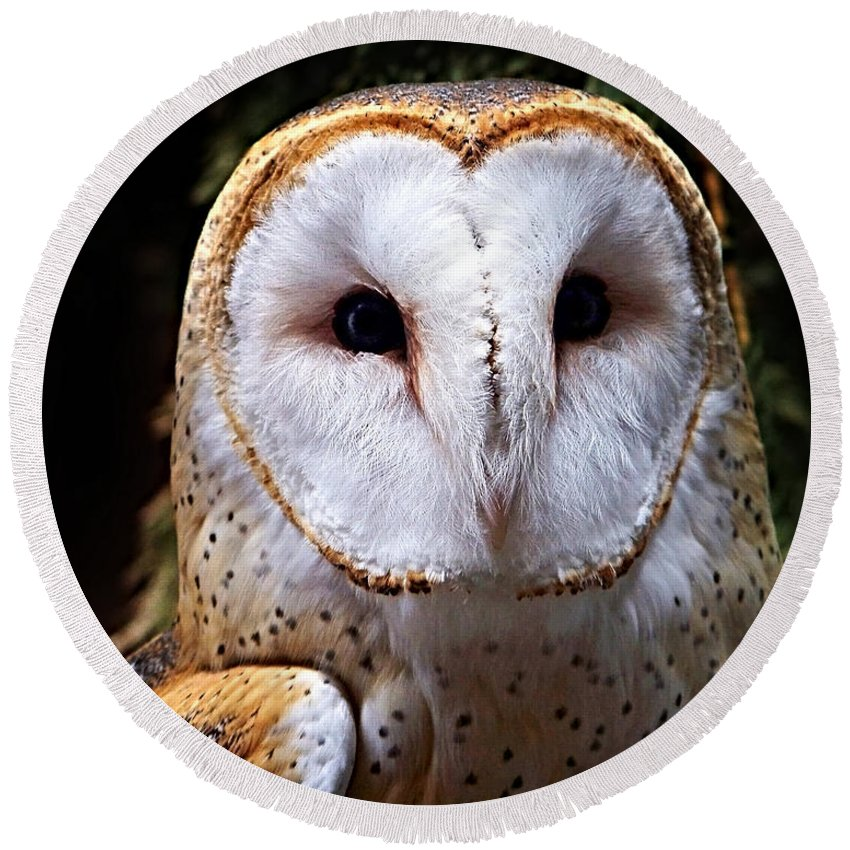 Barn Owl Round Beach Towel featuring the photograph Barn Owl by Anthony Jones