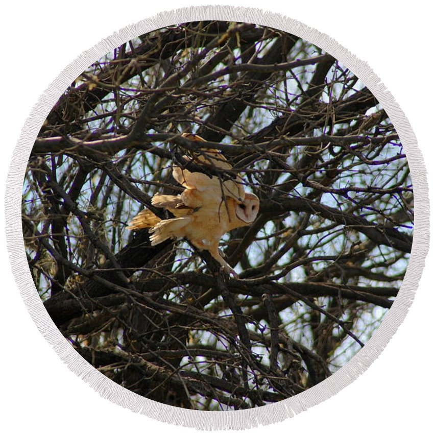 Large Round Beach Towel featuring the photograph Barn Owl In A Tree by Teresa Stallings