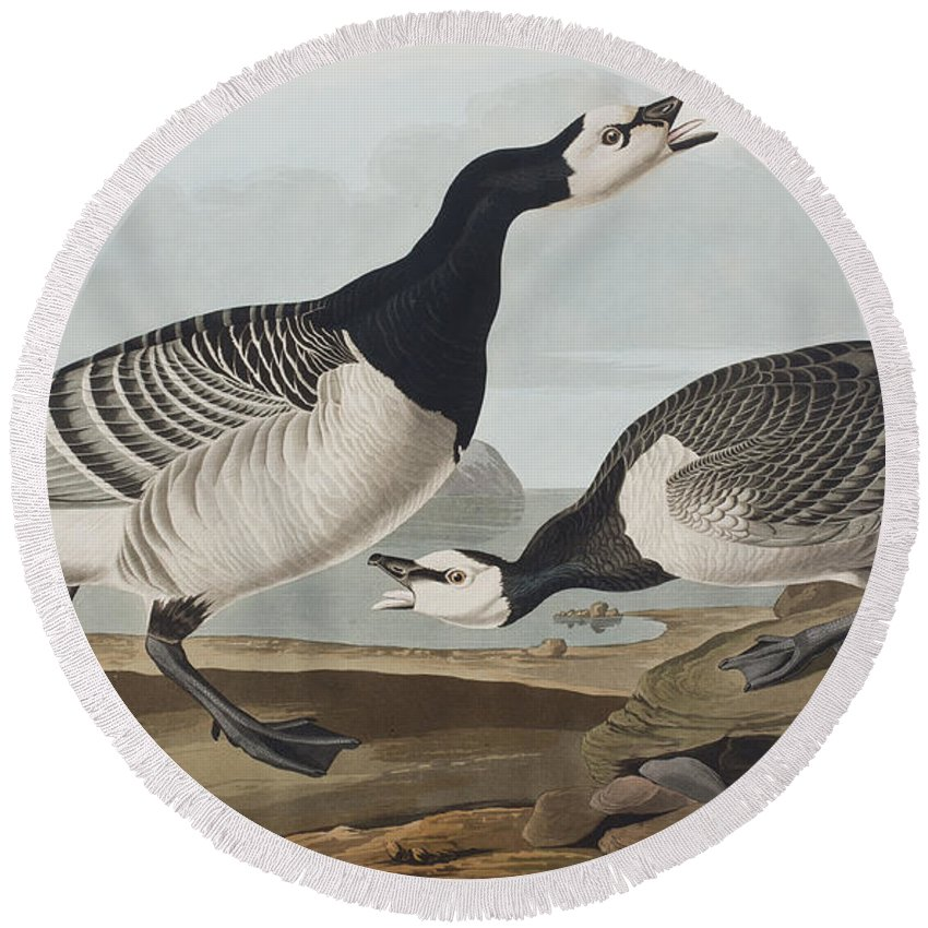 Barnacle Goose Round Beach Towel featuring the painting Barnacle Goose by John James Audubon