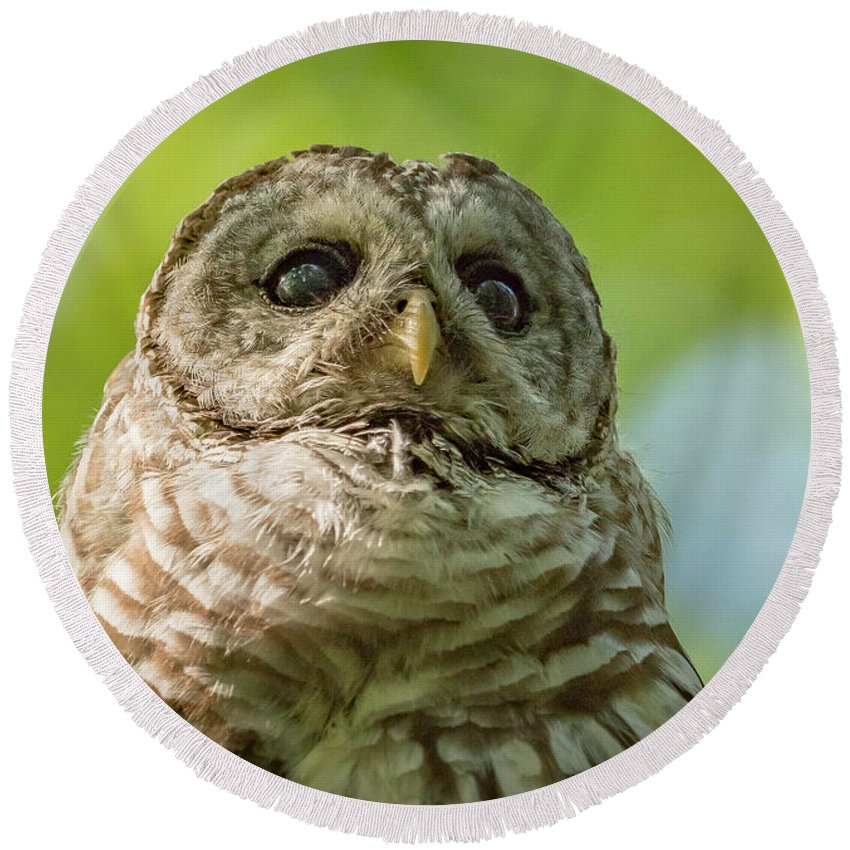 Owl Round Beach Towel featuring the photograph barred Owl Portrait by Joe Gliozzo