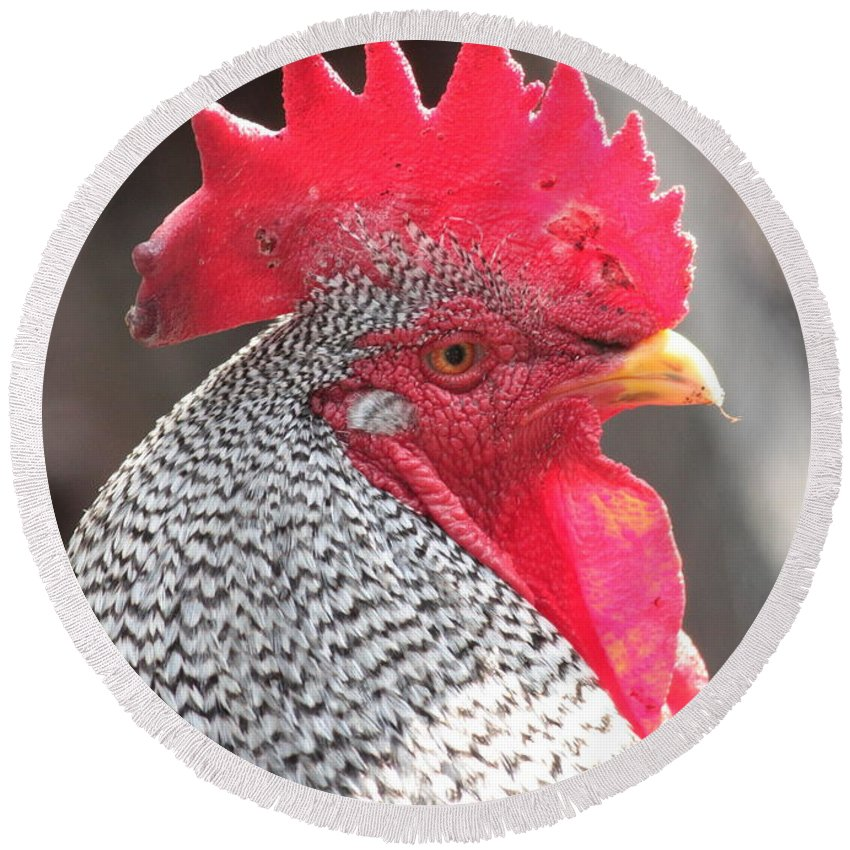 Chicken Round Beach Towel featuring the photograph Barred Rock Rooster by Carol Groenen