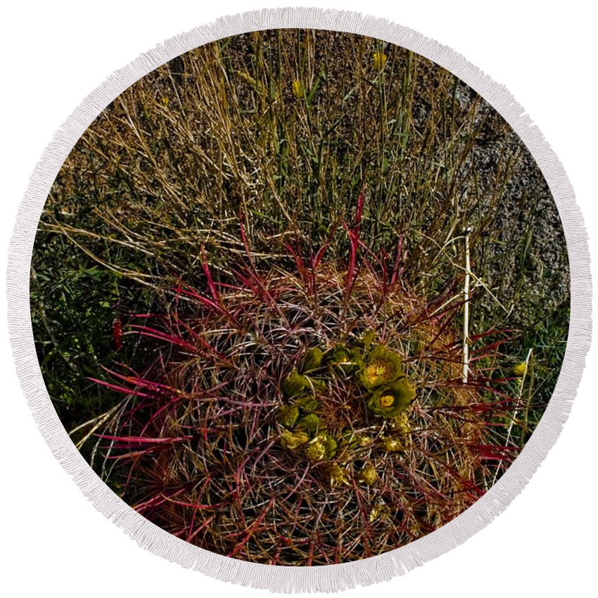Barrel Cactus Round Beach Towel featuring the photograph Barrel Cactus Top View by Chris Brannen