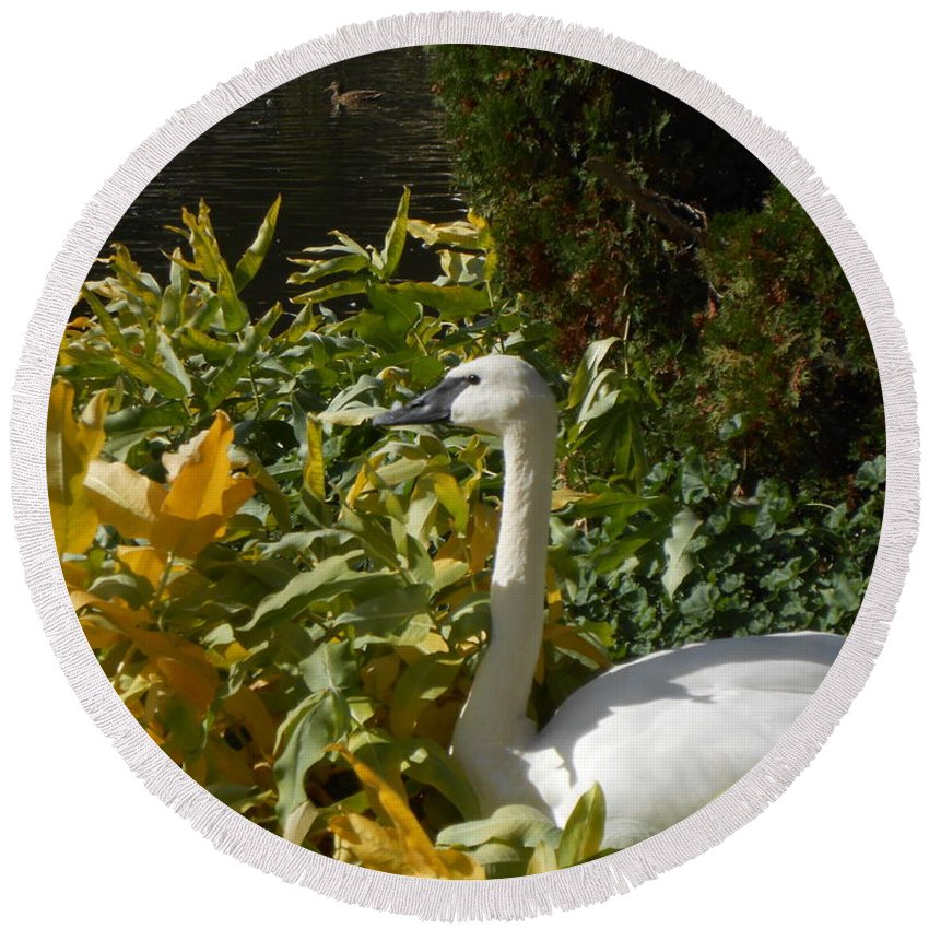 Swan Round Beach Towel featuring the photograph Basking By The Pond by LKB Art and Photography