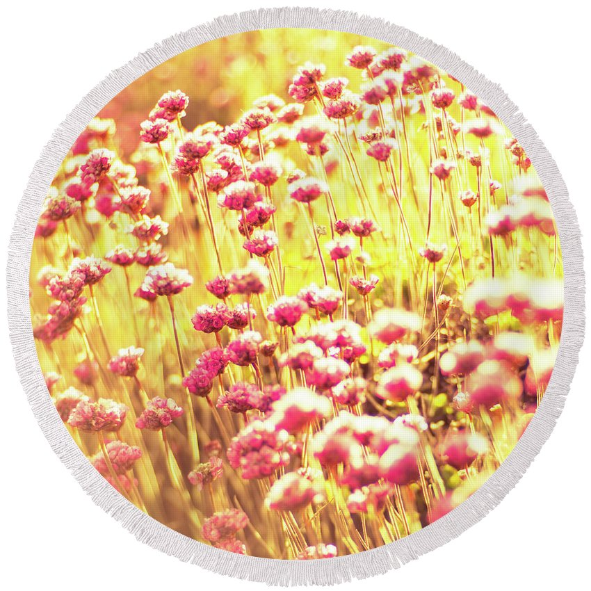 Pink Round Beach Towel featuring the photograph Bathed In Golden Light by Manuela Durson