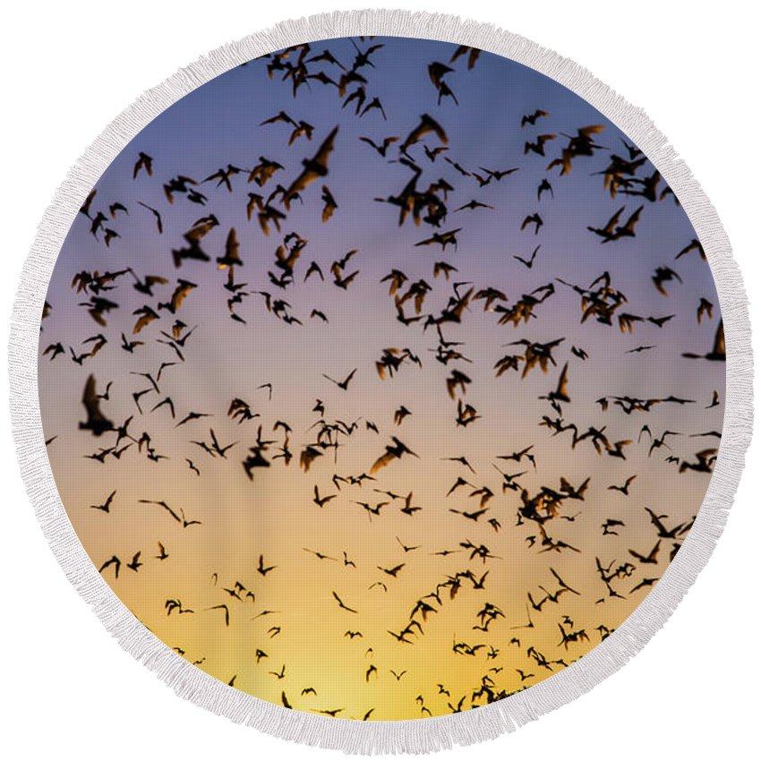 Bats Round Beach Towel featuring the photograph Bats At Bracken Cave by Michael Tidwell
