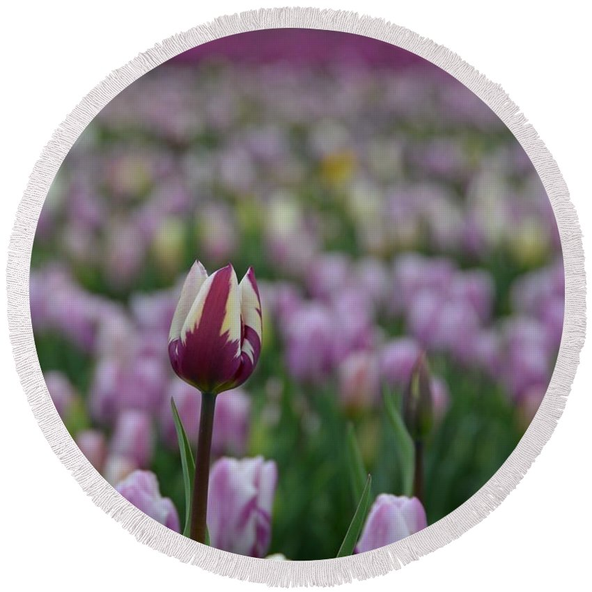 Tulip Round Beach Towel featuring the photograph Be True To Yourself by Lena Photo Art