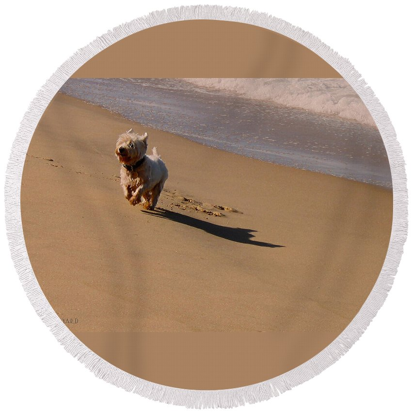 Wave Round Beach Towel featuring the photograph Beach Puppy by Susan Vineyard