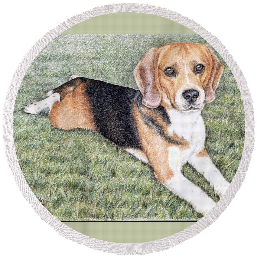 Dog Round Beach Towel featuring the drawing Beagle by Nicole Zeug