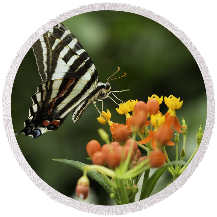 Butterfly Round Beach Towel featuring the photograph Beautiful Butterfly Waving by Billy Bateman