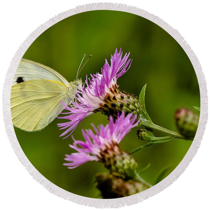 Macro Round Beach Towel featuring the photograph Beautiful Butterfly On Pink Thistle by Lori Coleman