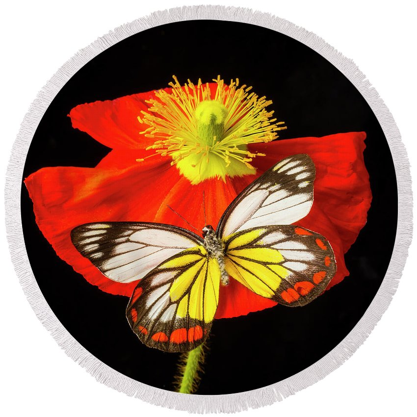 Color Round Beach Towel featuring the photograph Beautiful Butterfly On Poppy by Garry Gay
