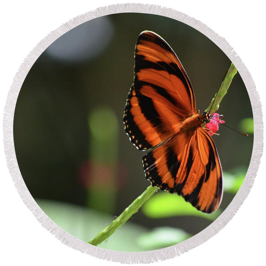 Butterfly Round Beach Towel featuring the photograph Beautiful Color Patterns To An Oak Tiger Butterfly by DejaVu Designs