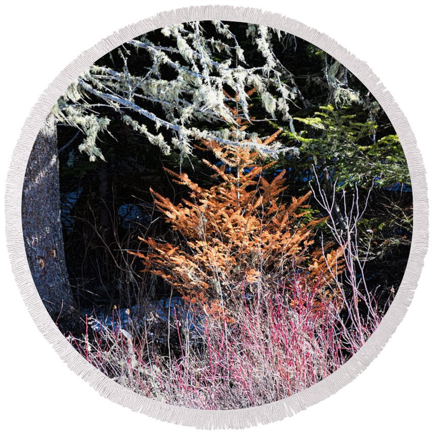 Trees Round Beach Towel featuring the photograph Beautiful Dead by William Tasker