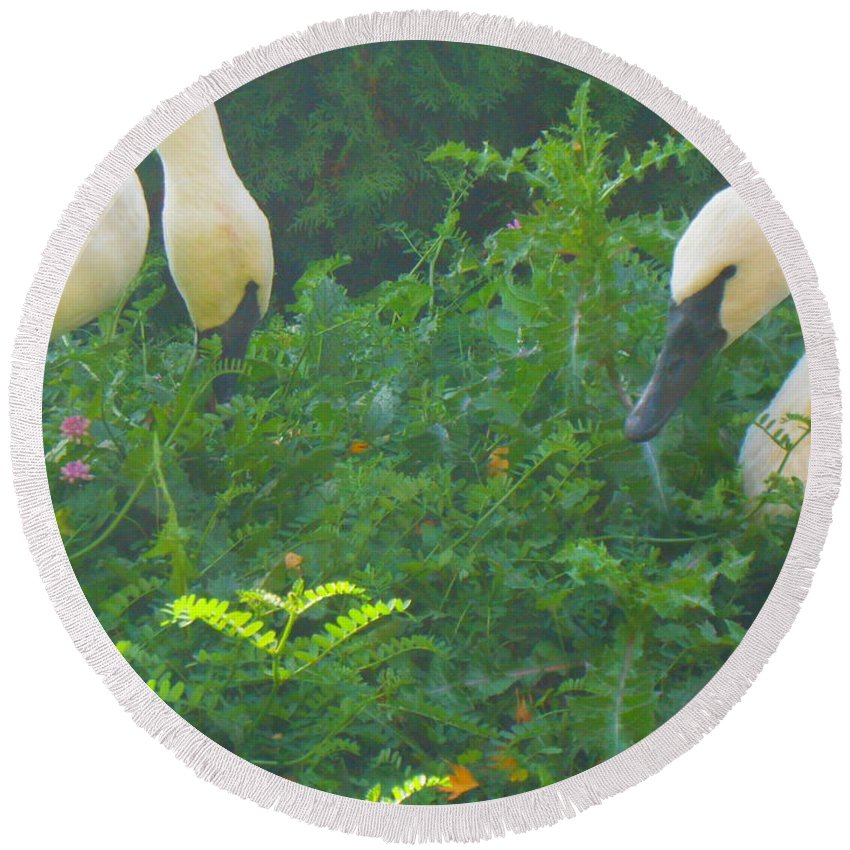 Trumpeter Swan Round Beach Towel featuring the photograph Beautiful Duo by LKB Art and Photography