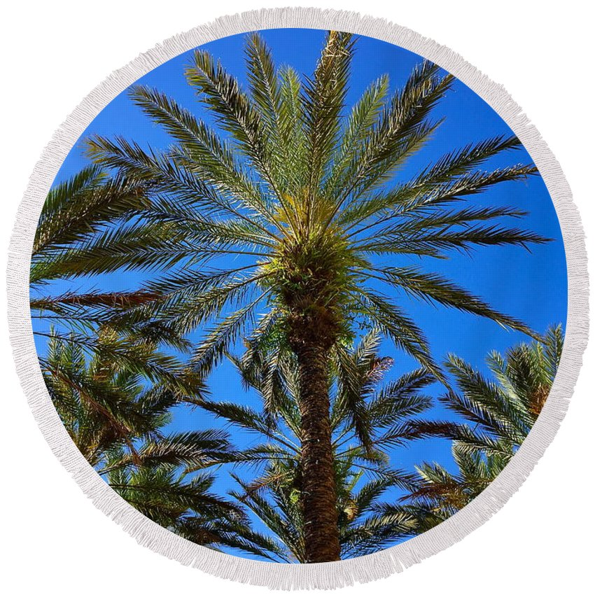 Palm Round Beach Towel featuring the photograph Beautiful Florida Palm Trees by Denise Mazzocco