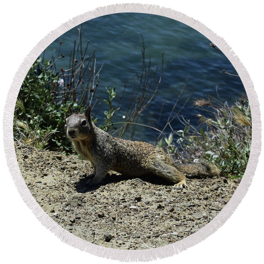 Squirrel Round Beach Towel featuring the photograph Beautiful Ground Squirrel Standing At The Edge Of The Coast by DejaVu Designs