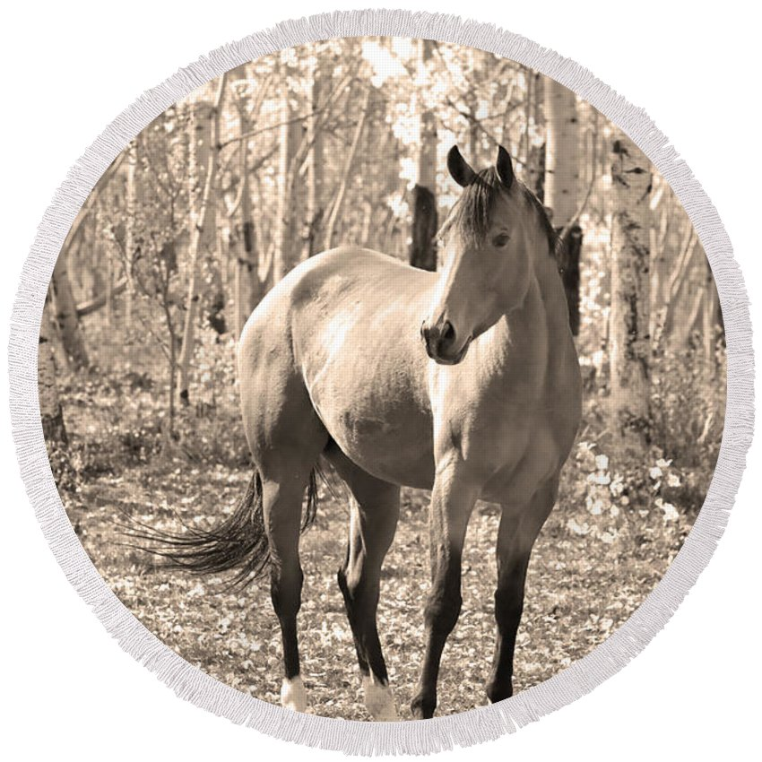 Horse Round Beach Towel featuring the photograph Beautiful Horse In Sepia by James BO Insogna