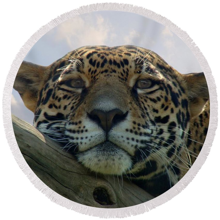 Jaguar Round Beach Towel featuring the photograph Beautiful Jaguar by Sandy Keeton