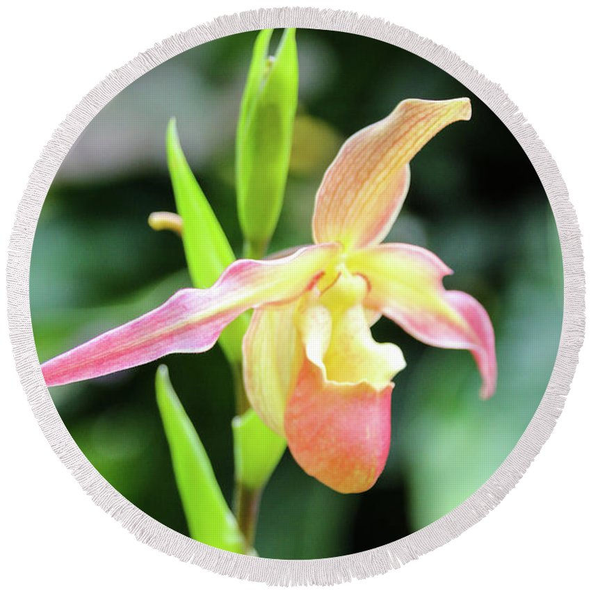 Orchids Round Beach Towel featuring the photograph Beautiful Lady Slipper by Tom and Marilyn's Photo Shoots