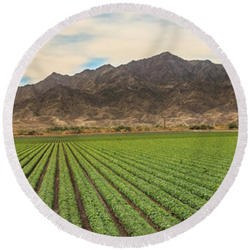 Winter Lettuce Round Beach Towel featuring the photograph Beautiful Lettuce Field by Robert Bales