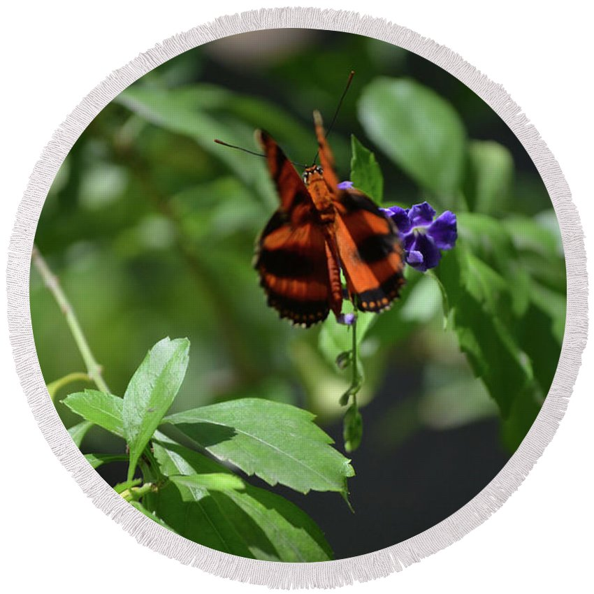 Butterfly Round Beach Towel featuring the photograph Beautiful Oak Tiger Butterfly On Purple Flowers by DejaVu Designs