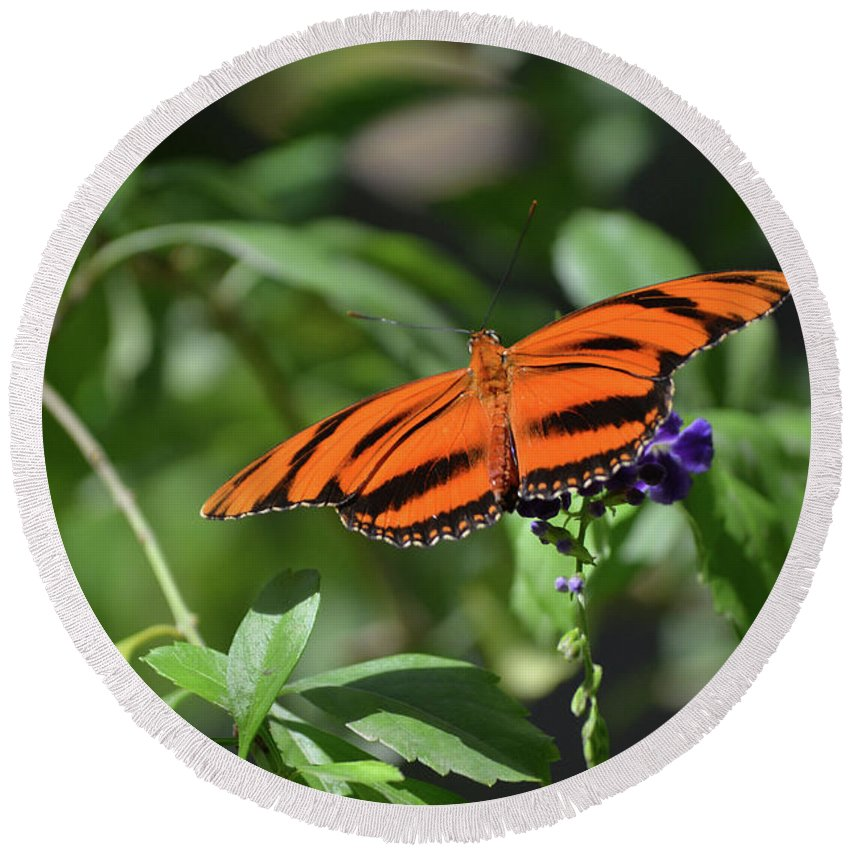 Butterfly Round Beach Towel featuring the photograph Beautiful Orange Oak Tiger Butterfly In Nature by DejaVu Designs