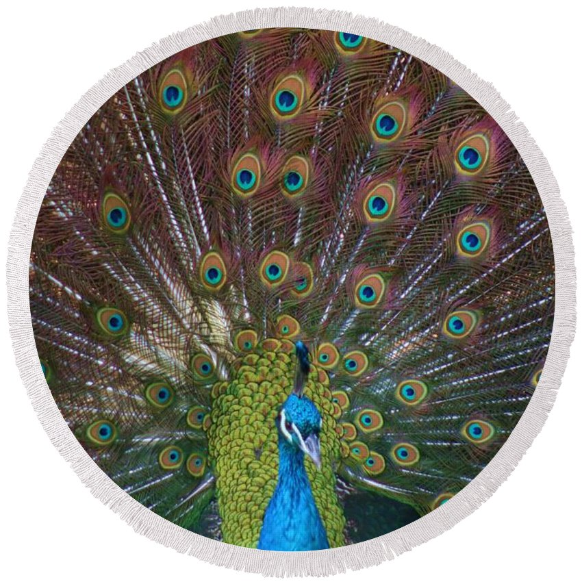 Peacock Round Beach Towel featuring the photograph Beautiful Peacock by Tina Meador