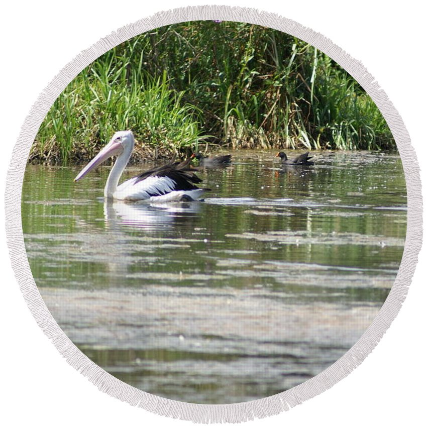 Pelican Round Beach Towel featuring the photograph Beautiful Pelican by Brian Leverton