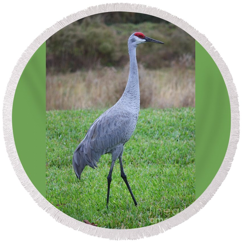Animals Round Beach Towel featuring the photograph Beautiful Sandhill Crane by Carol Groenen