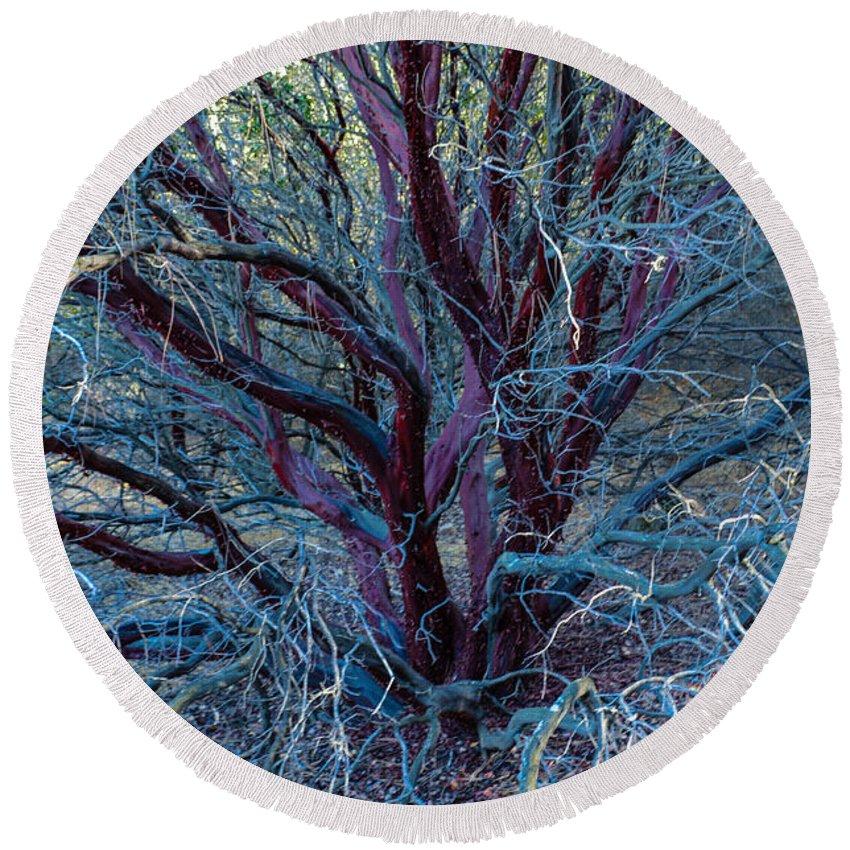 Tree Round Beach Towel featuring the photograph Beautiful Tree by Miranda Strapason