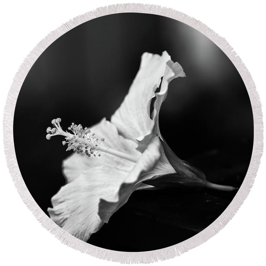 Beauty Fame Short Life Hibiscus Monochrome Black White Perfect Wife Nature Botanic Close Up Macro Still Empty Hawaii Women Woman Girl Flower Feminine Meaning Symbol Delicate Personal Glory Round Beach Towel featuring the photograph Hibiscus Flower by Martin Alonso