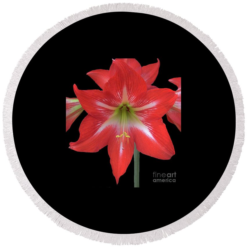 Amaryllis Round Beach Towel featuring the photograph Beauty Of The Amaryllis by D Hackett