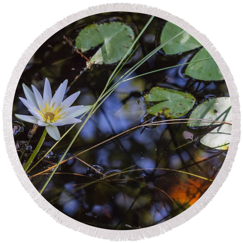 Water Lily Round Beach Towel featuring the photograph Beauty Of The Swamp by Christopher L Thomley