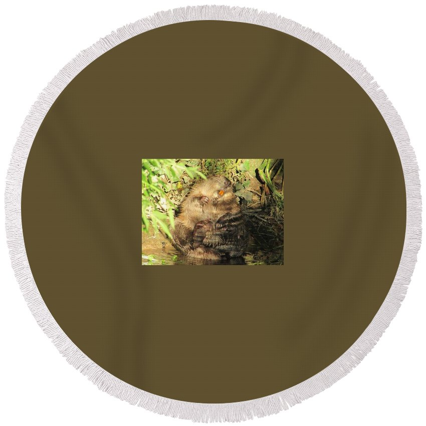 Round Beach Towel featuring the photograph Beavers by Kerry Drew