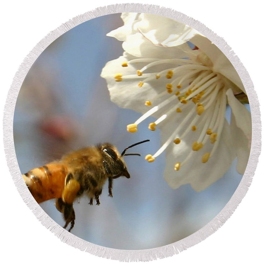 Honey Round Beach Towel featuring the photograph Bee And A Blossom by Danny Yanai