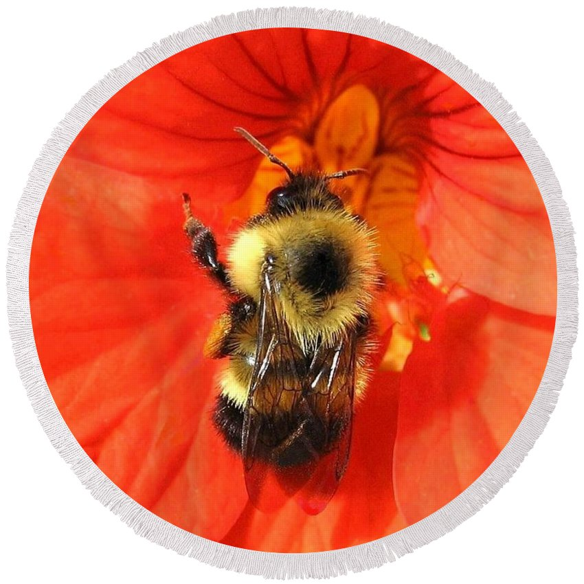 Bee Round Beach Towel featuring the photograph Bee And Nasturtium by Will Borden