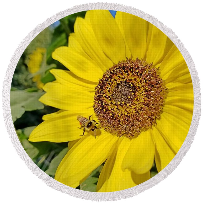 Yellow Round Beach Towel featuring the photograph Bee-dazzled by Amanda Smith
