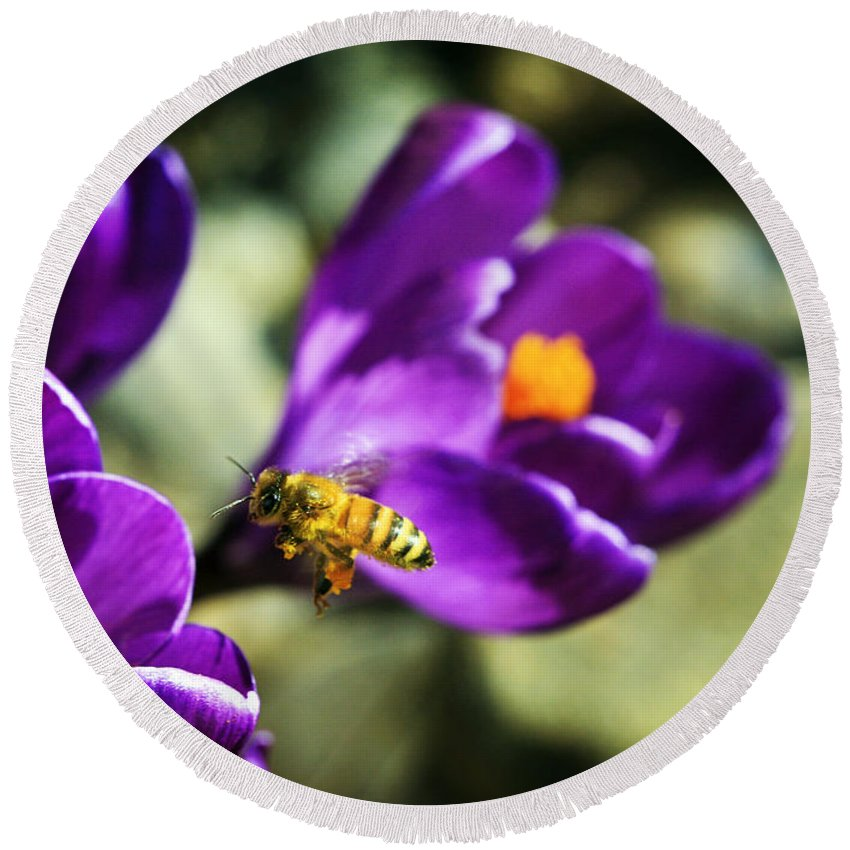 Bee Round Beach Towel featuring the photograph Bee In Flight by Marilyn Hunt